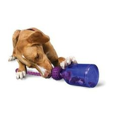 The 6 Best Toys to Keep Your Dog Really Busy while home alone