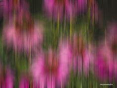 Spring is arriving. Pembroke Ontario, North America, Dandelion, Canada North, Digital Art, Spring, Flowers, Plants, Dandelions