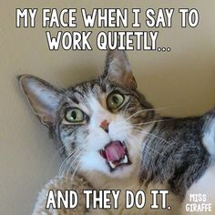 Teacher quotes funny: My face when I tell students to work quietly. Funny Animals With Captions, Funny Animal Memes, Funny Jokes, Funny Faces Quotes, Super Funny Quotes, Funny Pictures For Kids, Funny Kids, Funny Work, Funny Stuff