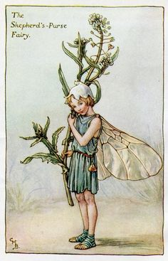 """Vintage print 'The Shepherd's-Purse Fairy' by Cicely Mary Barker from """"The Book of the Flower Fairies""""; Poem and Pictures by Cicely Mary Barker, Published by Blackie & Son Limited, London [Flower Fairies - Spring] Cicely Mary Barker, Flower Fairies Books, Spring Fairy, Kobold, Vintage Fairies, Beautiful Fairies, Fantasy Illustration, Fairy Art, Magical Creatures"""