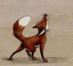 Image result for fox old drawings