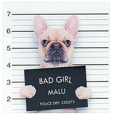 Animal Patches for Clothes Ironing on Heat Transfer Stickers DIY Appliqued Patch Cloth Decorations Sierra Leone, Sri Lanka, Stickers Online, Diy Stickers, Seychelles, Cãezinhos Bulldog, Diy Design, Curtain Weights, Fawn French Bulldog