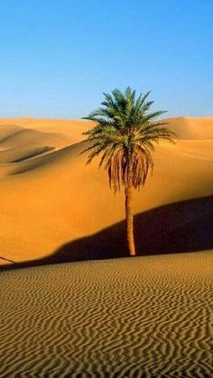 ¤ Desierto de Sahara.