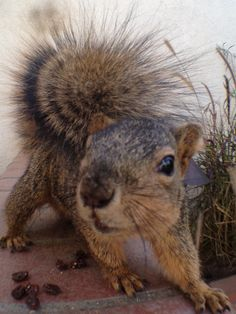 Hello Squirrel!  :-)