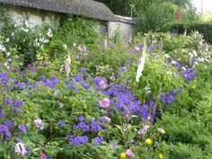 A blowsy border of roses, foxgloves and geraniums, in one corner of the vegetable garden