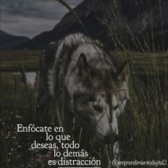 Frases Bts, Motivational Quotes, Inspirational Quotes, Wolf Quotes, Millionaire Quotes, Business Motivation, Steve Jobs, Spanish Quotes, Good Vibes