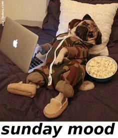 The Sunday Mood  - 7JOKES - The Fun Strarts Here, Extremely funny posts, funny pics, funny designs, funny videos, pranks, funny animals and much..