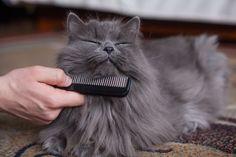 Remedios caseros antipulgas para perros y gatos