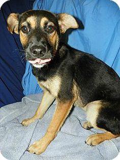 Yorktown Va Golden Retriever Meet Murphy A Dog For Adoption