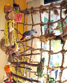 Hemp Rope Net Swing Ladder Toys for Pet Parrot Birds Chew Play Climbing. Best gift for parrot or parrot lovers. Suitable for all kinds of parrot to climb. Enough tenacity for parrot to bite and play. Diy Parrot Toys, Diy Bird Toys, Parrot Pet, Parrot Bird, Large Parrot Cage, Amazon Parrot, African Grey Parrot, Bird Aviary, Crazy Bird