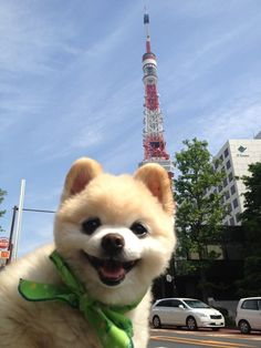 In front of  Tokyo tower