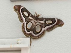 Atlas Moth, Budget Meals, Kitchen Hacks, South Africa, Make It Yourself, Ideas