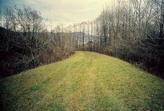 #field #photography #trees #scenery