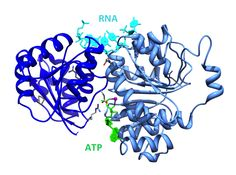Unraveling mutations in pediatric brain cancer (Medulloblastoma). Read on: http://blogs.brandeis.edu/science/2012/07/26/unraveling-mutations-in-pediatric-brain-cancer/#