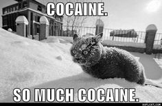 ROFLCAT - Funny Cat Pictures, Lolcats, Cute Cats