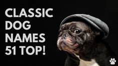 🐕Classic Dog Names 51 BEST 🐾 OLD-FASHIONED 🐾 Ideas | Names Unique Female Dog Names, Best Dog Names, Cute Girl Puppy Names, Cute Names, Best Apartment Dogs, Best Dogs For Families, Best Dog Breeds, Pet Tips, Girl And Dog