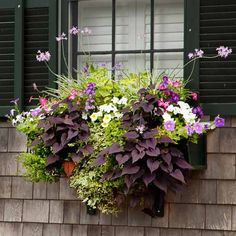 Trailing variegated ivy and purple sweet-potato vine ground an exuberant display of flowering society garlic, petunias, angelonia, pink nicotiana, and white impatiens. | Photo: Deborah Whitlaw Llewellyn | thisoldhouse.com
