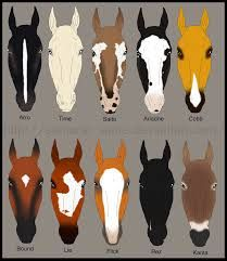 List Of Synonyms And Antonyms Of The Word Horse Face Markings Quiz