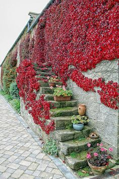 What an awesome wall garden! Landscape Stairs, Landscape Bricks, Garden Gates, Balcony Garden, Beautiful Flowers Garden, Beautiful Gardens, Boston Ivy, Wooded Landscaping, Virginia Creeper
