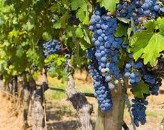 French vineyards...French wine...Great deals! Visit...  www.mobilewinedeals.com