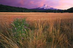 Mt. Hood from National Forest Development Road 2810 · Mt. Hood Wilderness · Parkdale · Oregon · USA    by Tula Top