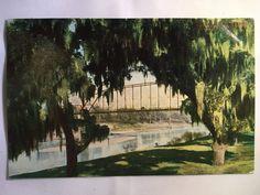Vintage Colorado River South Texas bridge blank postcard unposted early 1900s