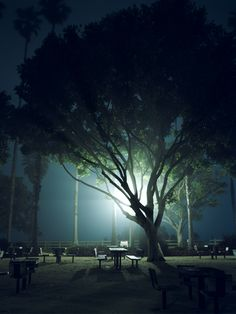 Streetlights at night.