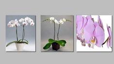 Come curare l'Orchidea? Ecco i 5 passi per averla sana e vigorosa per tu...