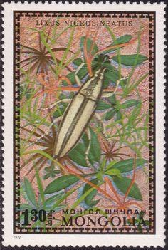 Mongolia, 1972, Lixus nigrolineatus