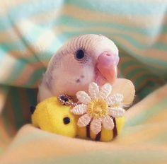 BirdTricks.com