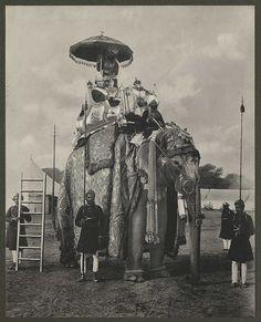 Lord & Lady Curzon seated upon the State Howdah (Elephant with Golden Ambari), Delhi Durba, India, Colonial India, British Colonial, Elephant Face, Indian Elephant, Udaipur, Jaisalmer, Elefante Hindu, Elephas Maximus, Indian Photoshoot