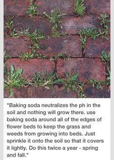 How To Kill Grass And Weeds Where You Don't Want