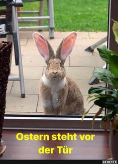 327 Besten Ostern Bilder Auf Pinterest In 2019 Rabbits Easter Und