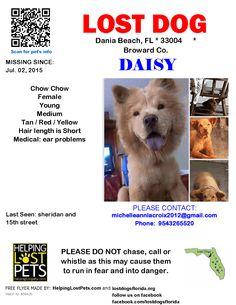 Lost Dog - Chow Chow - Dania Beach, FL, United States