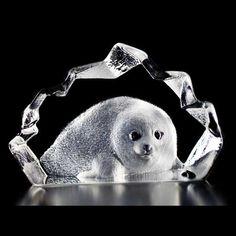 Wildlife Seal pup, Mats Jonasson