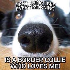 The first thing I see every morning is a border collie who loves me!