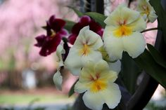 Orchid Show - New York Botanical Garden