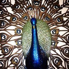 My vintage peacock