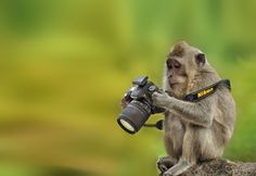 Animals That Want to Be Photographers | Bored Panda