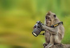 30-animaux-qui-veulent-prendre-des-photos-10