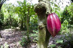Medicine plants from the Amazon Rainforest | eHow UK