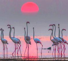 Flamingos Sunset..