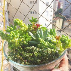 Bom dia sábado!  #oitominhocas #suculentas #suculovers #plantinhas #decoração #ecofriendly #verde #elo7br #presentecriativo