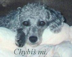 gify   Chybíš mi Dogs, Animals, Animales, Animaux, Pet Dogs, Doggies, Animal, Animais