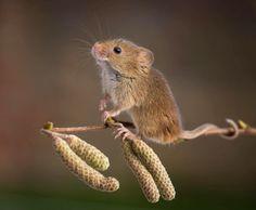 25 photos adorables dans l'intimité des souris sauvages | Buzzly