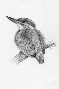 Kingfisher - a drawing by YY Graphite pencil on paper, Bird Pencil Drawing, Bee Drawing, Realistic Pencil Drawings, Bird Drawings, Animal Drawings, Drawing Sketches, Sketching, African Drawings, Pencil Drawing Inspiration