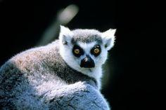 التنوّع البيئي في جزيرة مدغشقر