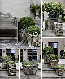 Dove grey wicker baskets with topiary plants and boxwood . Garden Cottage, Farmhouse Garden, Garden Planters, Basket Planters, Boxwood Planters, Boxwood Shrub, Rattan Planters, Topiary Plants, Garden Basket