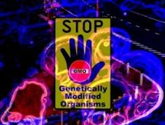 Top 8 Genetically Modified Foods to Avoid