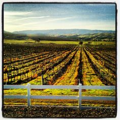 Sunshine on the #vines.  Beautiful Livermore #Wine Country in California!